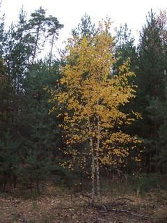 FOTKA - Podzim v lese V