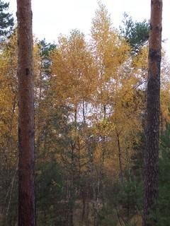 FOTKA - Podzim v lese VI