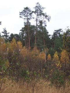 FOTKA - Podzim v lese VII