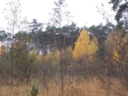 FOTKA - Podzim v lese VIII