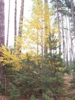 FOTKA - Podzim v lese IX