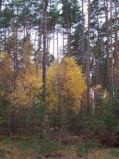 FOTKA - Podzim v lese X