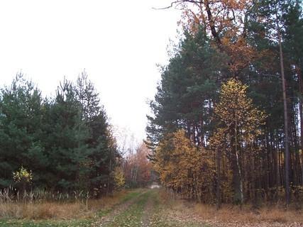 FOTKA - Podzim v lese XI