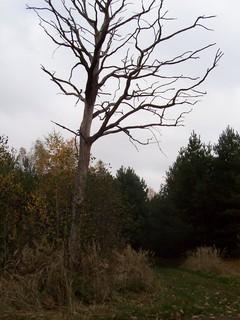 FOTKA - Podzim v lese XIII