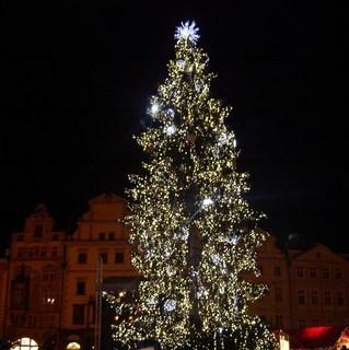 FOTKA - Stromek na Staromáku v Praze