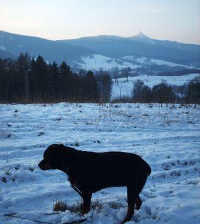 FOTKA - Roxy  a Ještěd /2008/