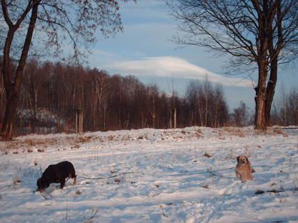 FOTKA - Roxy a Aisha na prochazce/prosinec 2008/.