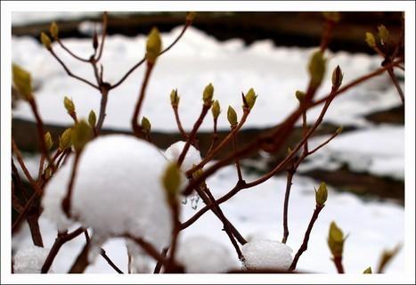 FOTKA - skoro jarní