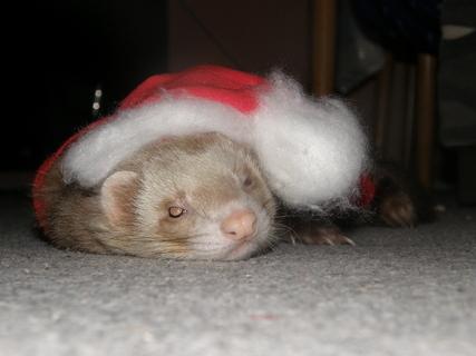 FOTKA - Freťo a vianoce