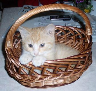 FOTKA - sisi ve svém košíčku