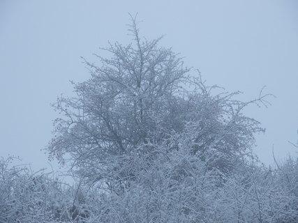 FOTKA - Zasněžený strom v mlze