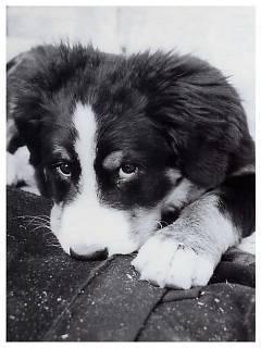 FOTKA - psí kukuč