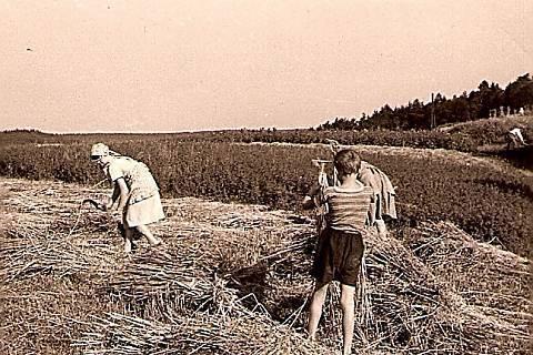 FOTKA - žně 1934 sklízelo se ručně