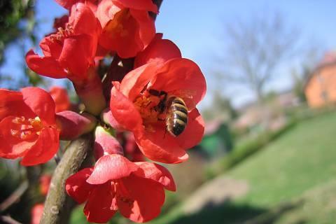 FOTKA - Květina 1
