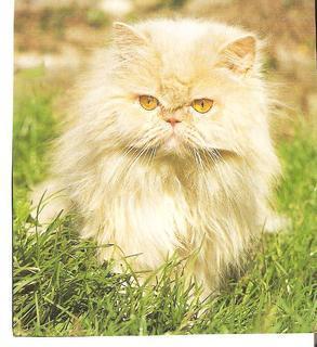 FOTKA - kočka