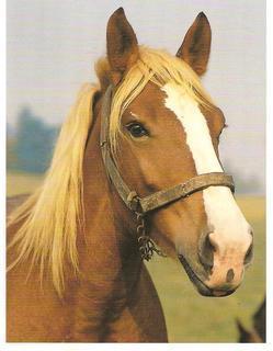 FOTKA - Kůń