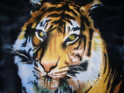 FOTKA - tygr