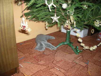 FOTKA - dáreček pod stromeček