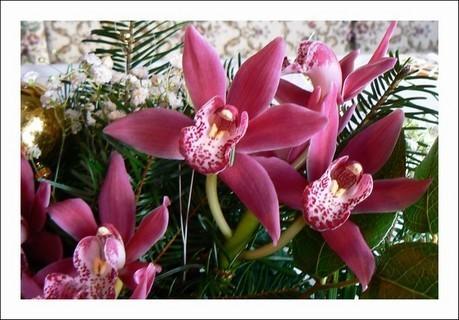 FOTKA - detail květů orchidejí