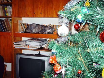 """FOTKA - A ja tahlé travím Štědrý den ! /""""Strejda"""" náší kočičky Nelly/"""