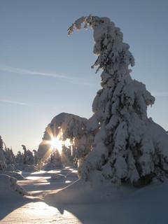 FOTKA - Sněhové království