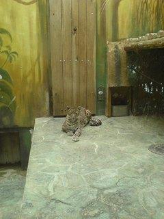 FOTKA - kočička:-)