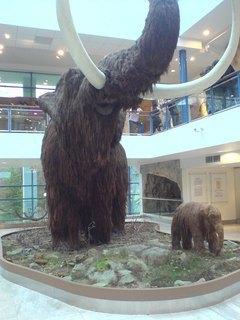 FOTKA - mamut
