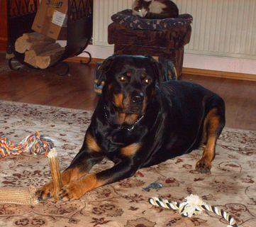 FOTKA - Roxy a kost  / prosinec 2008/.