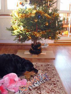 FOTKA - Roxy s dárky - vánoce 2008