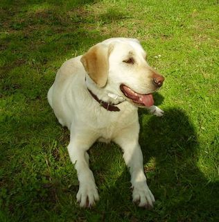 FOTKA - Můj pes