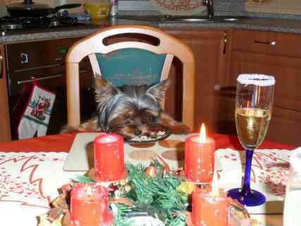 FOTKA - Benjik  a jeho první vánoce !