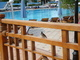Egyptský vrabčák