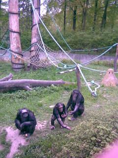 FOTKA - opice při krmení