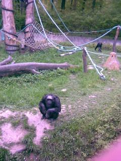 FOTKA - opice