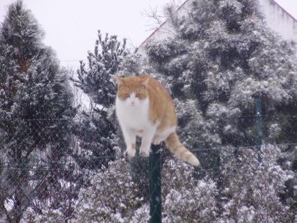 FOTKA - Kocour na plotě