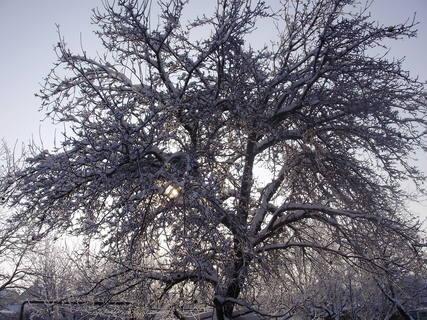 FOTKA - Jabloň na zahradě-