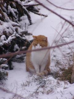 FOTKA - Kocour v zahradě