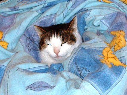 FOTKA - Nelly  v posteli.