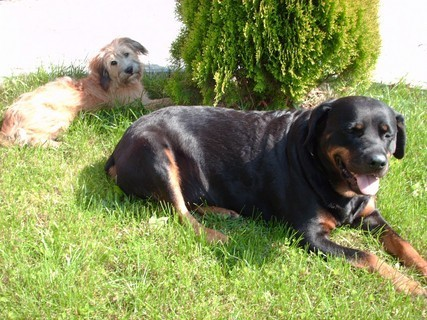 FOTKA - Roxy  a Aisha - odpočíváme / leto 2008/.