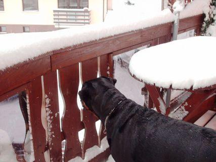 FOTKA - Roxy kouka z balkonu.
