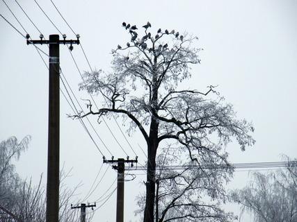 FOTKA - Zasněžený strom a elektrické vedení