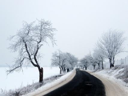 FOTKA - Zasněžené stromy u silnice