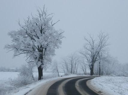FOTKA - Zasněžené stromy v zatáčce