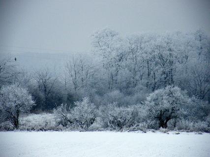 FOTKA - Zasněžené stromy foto