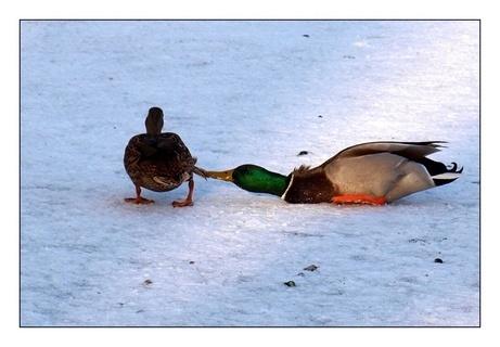FOTKA - laškování na ledu