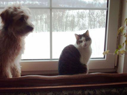 FOTKA - Dvě kamošky Nelly a Aisha u okna./ leden 2009/