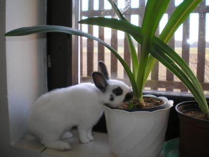 FOTKA - králíček Sam