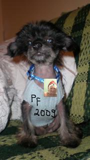 FOTKA - PF 2009
