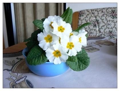 FOTKA - návod,jak si přiblížit jaro