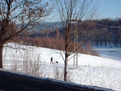 FOTKA - Roxy a Aisha  na ranní procházce -  26.1.2009.